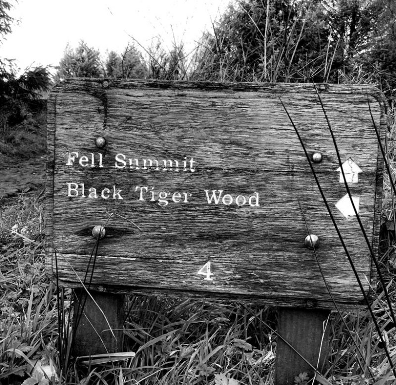 black tiger wood in forest - black tiger creative about us page